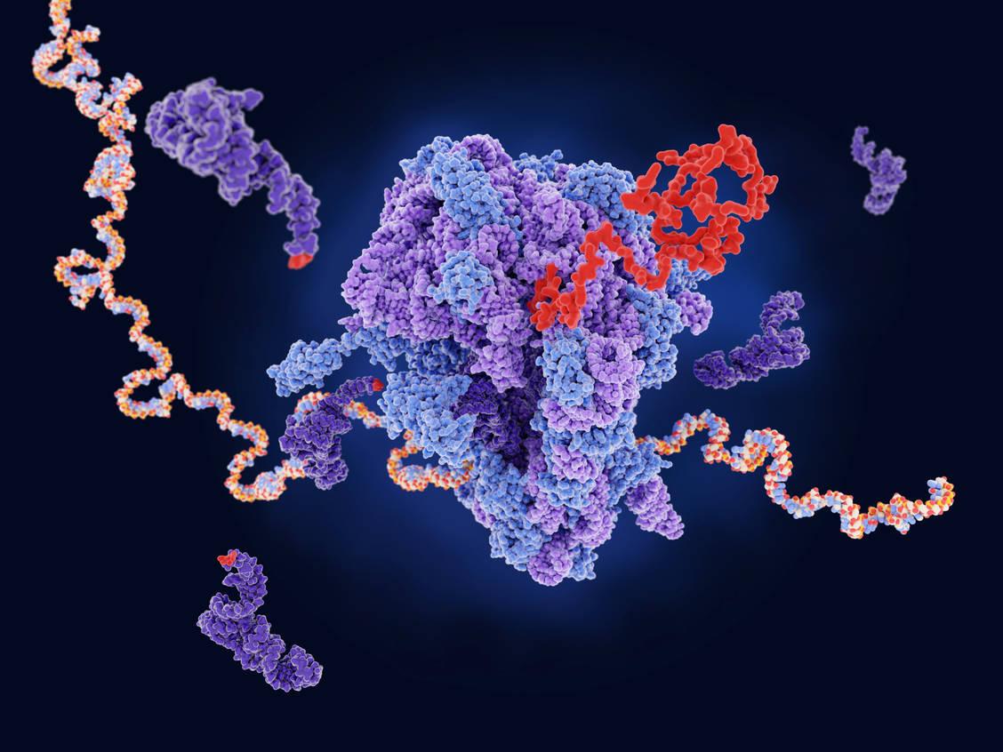 Virusinfektionen-Studien-mit-anderen-mRNA-Impfstoffen-kommen-in-Schwung