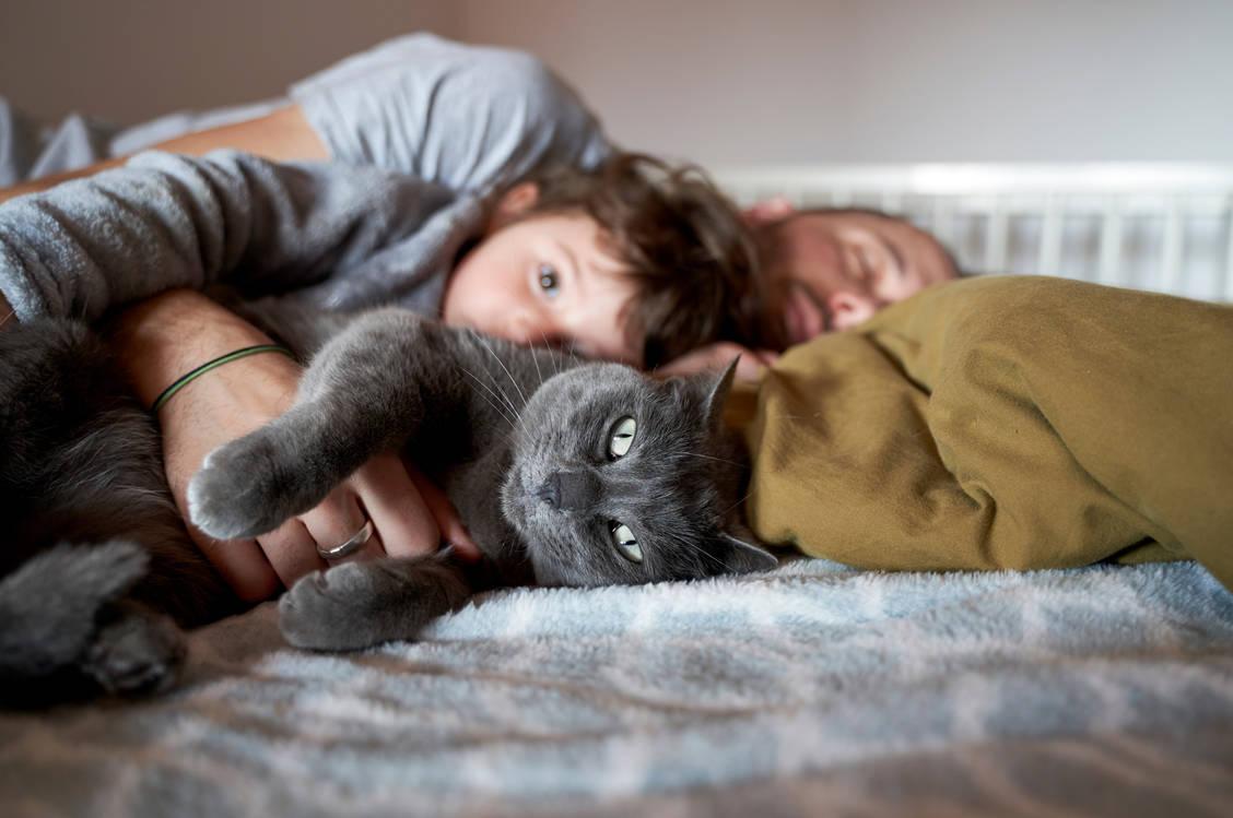Coronavirus Meldepflicht Fur Haustiere Kommt Pz Pharmazeutische Zeitung