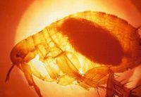 Parasiten Das Große Krabbeln Auf Der Haut Pharmazeutische Zeitung