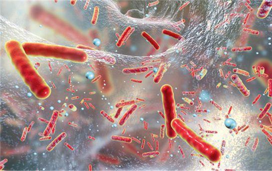 klebsiella pneumoniae toxine