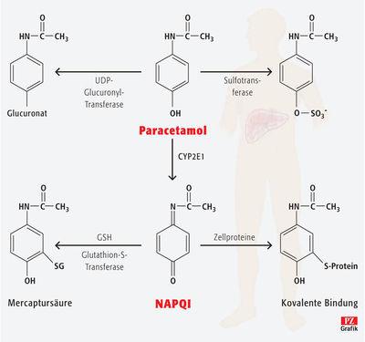Entgiftung zum Gift: Nebenwirkung Leberschaden | PZ