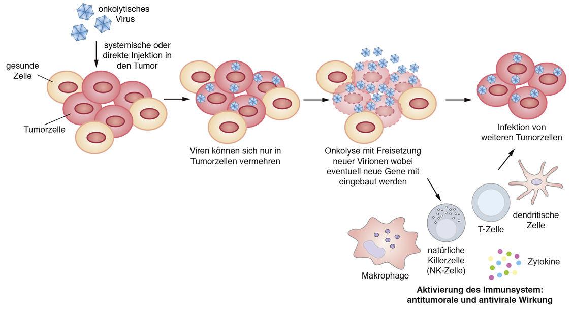 Viren Kompaktlexikon Der Biologie 7