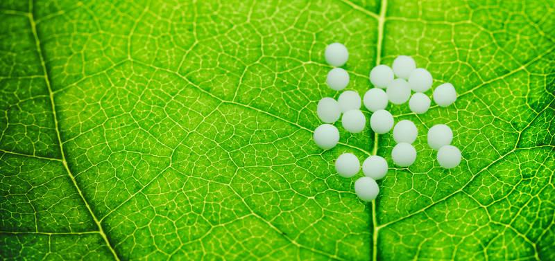 epstein barr virus homöopathie
