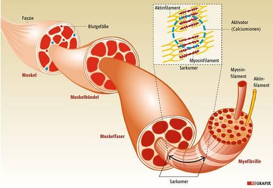 Hiv Übertragung Analsex