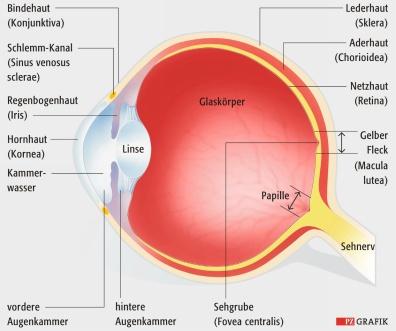 Arzneimittel: Nebenwirkung getrübter Blick | Pharmazeutische Zeitung