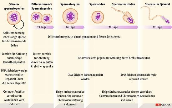 sperma lebensdauer nach der ejakulation