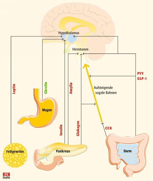 Neuropeptid Y Abnehmen