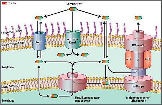 Gramnegative Bakterien Antibiotika